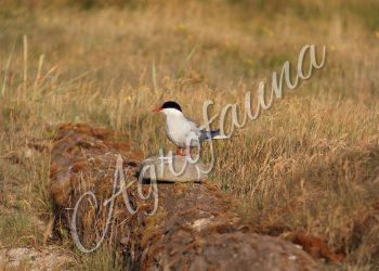 Giornata mondiale degli uccelli migratori