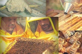 L'Apicoltura nell'azienda agricola tradizionale