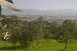 Gestione sostenibile dell'oliveto
