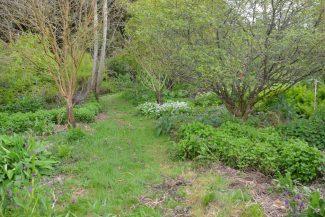 Introduzione al Forest Garden