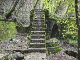Immersione nel bosco all'acquedotto di Colognole